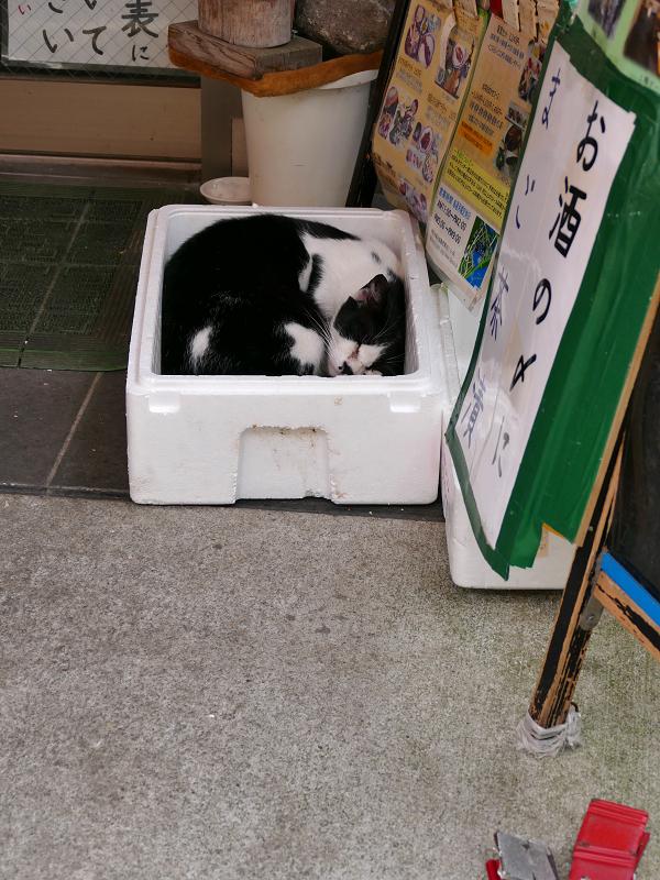 お店の前の発泡スチロール箱の黒白猫