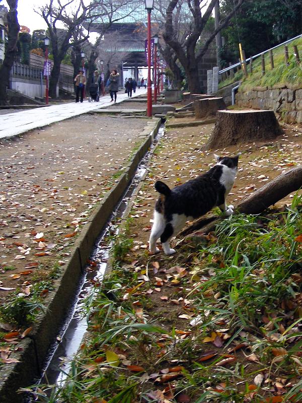 長い参道とキジ白猫1
