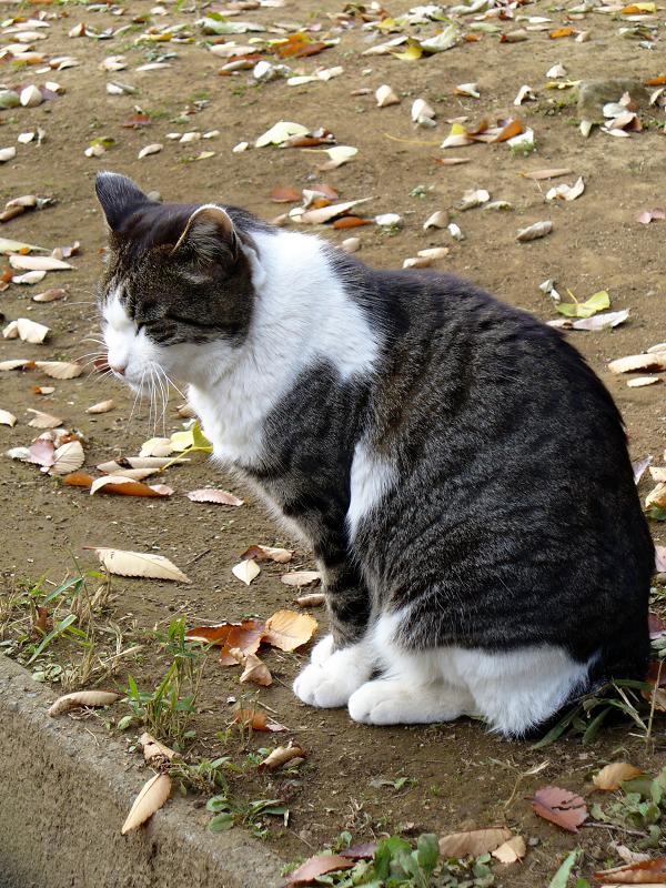 長い参道とキジ白猫2