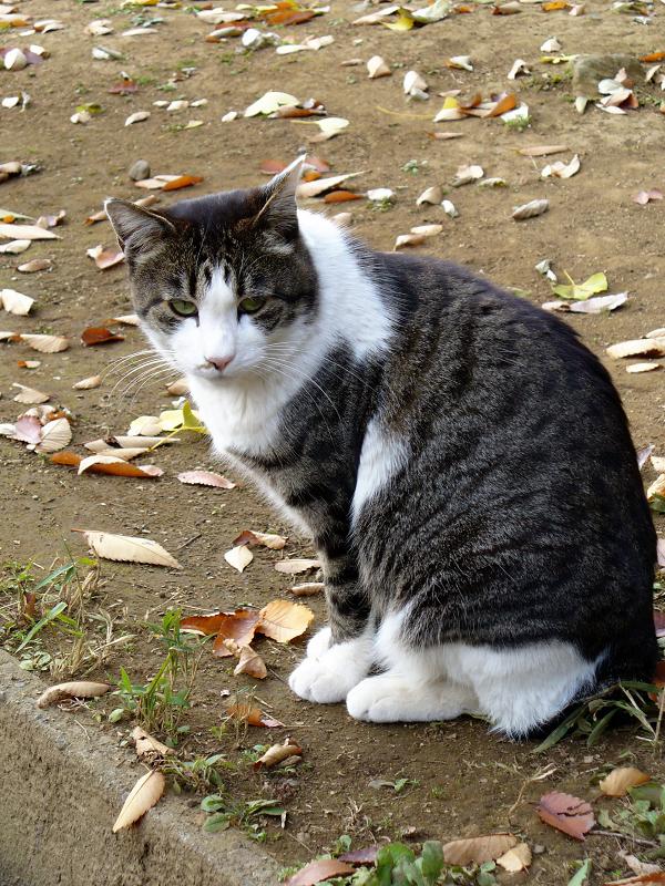 長い参道とキジ白猫3