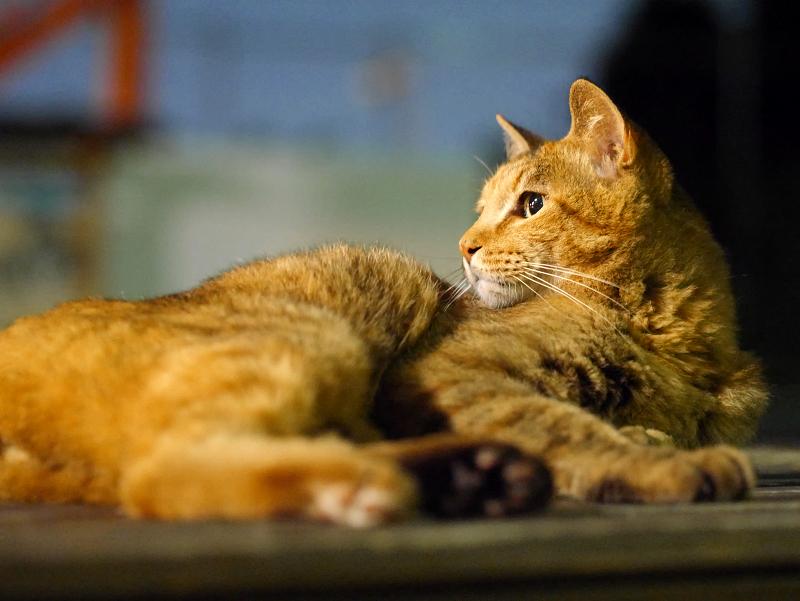 境内ベンチ外灯とサビ柄猫1