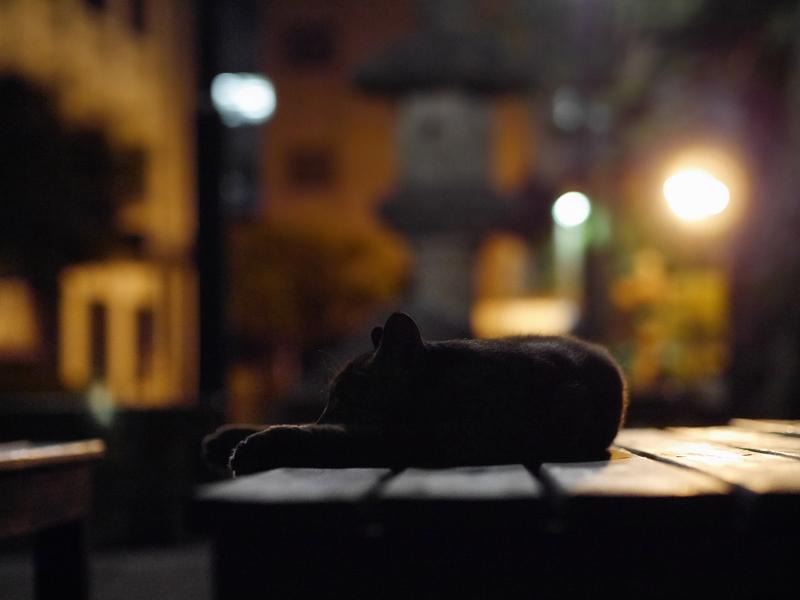 境内ベンチ外灯とサビ柄猫2