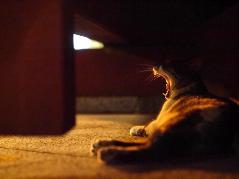 大寺の総門下のキジ白猫1