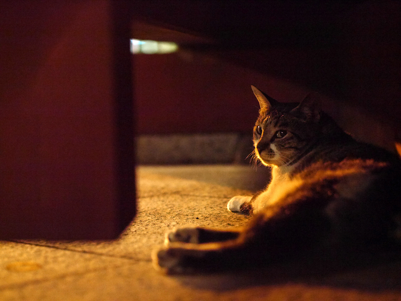 大寺の総門下のキジ白猫2