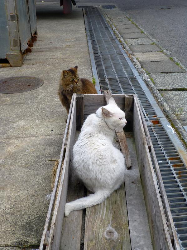 グレーチング木箱と2匹の猫1