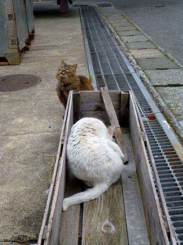 グレーチング木箱と2匹の猫2