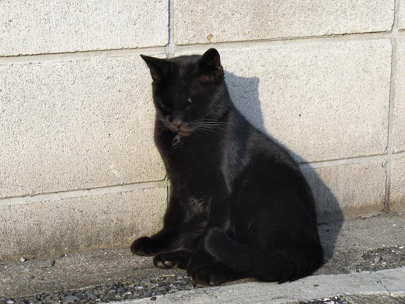 ブロック塀前の黒猫と影1