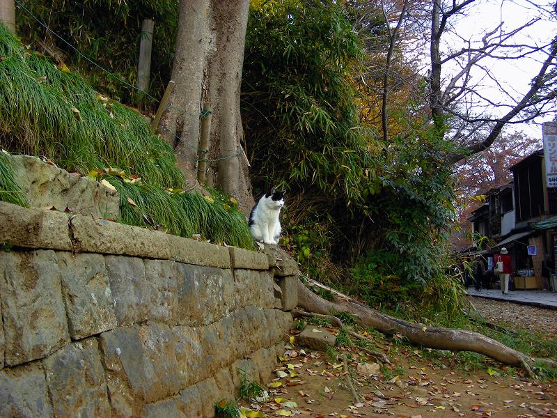 参道脇から飛び出してきた猫2