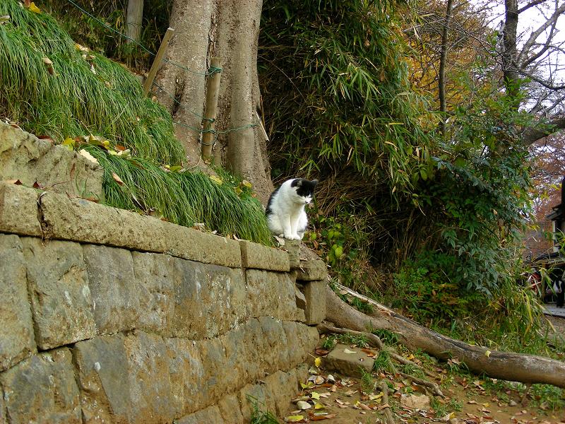 参道脇から飛び出してきた猫3