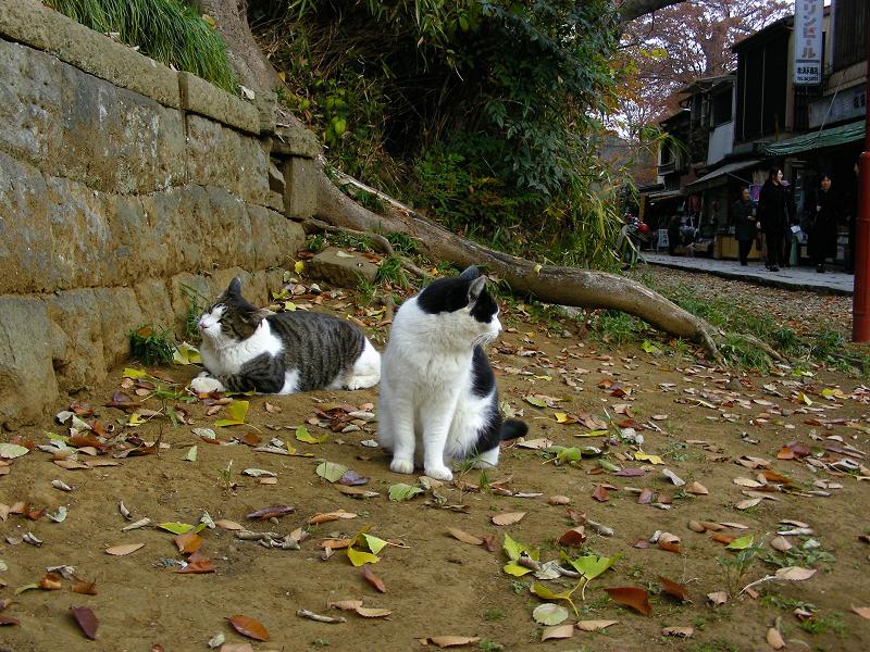 神社参道脇の猫たち1