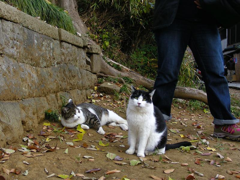 神社参道脇の猫たち2