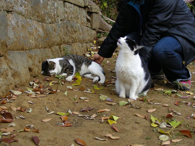 神社参道脇の猫たち4