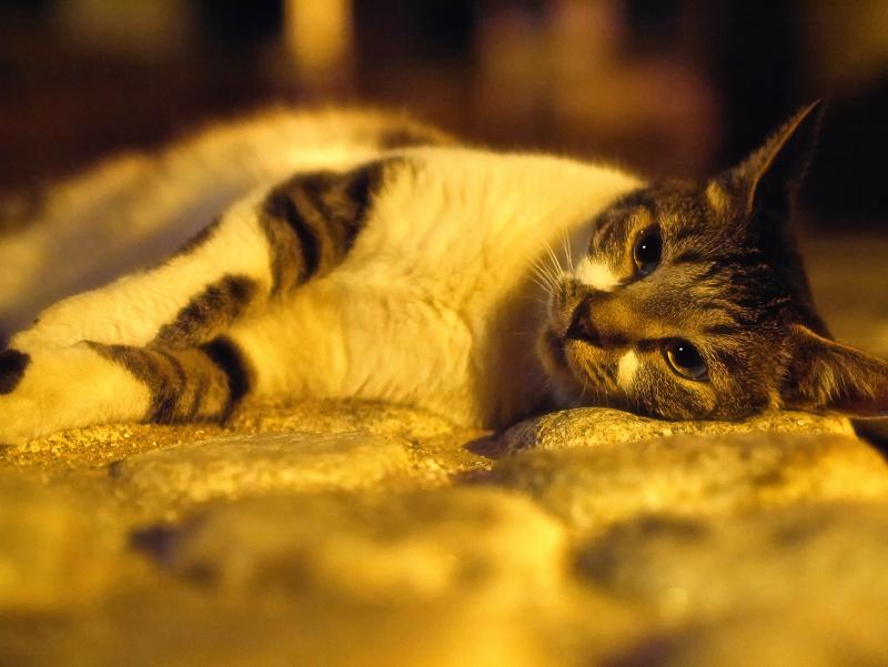 石畳で横になってるキジ白猫1