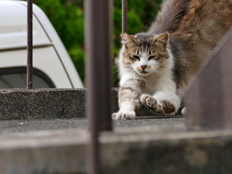 踊り場で伸びをする毛長の猫1