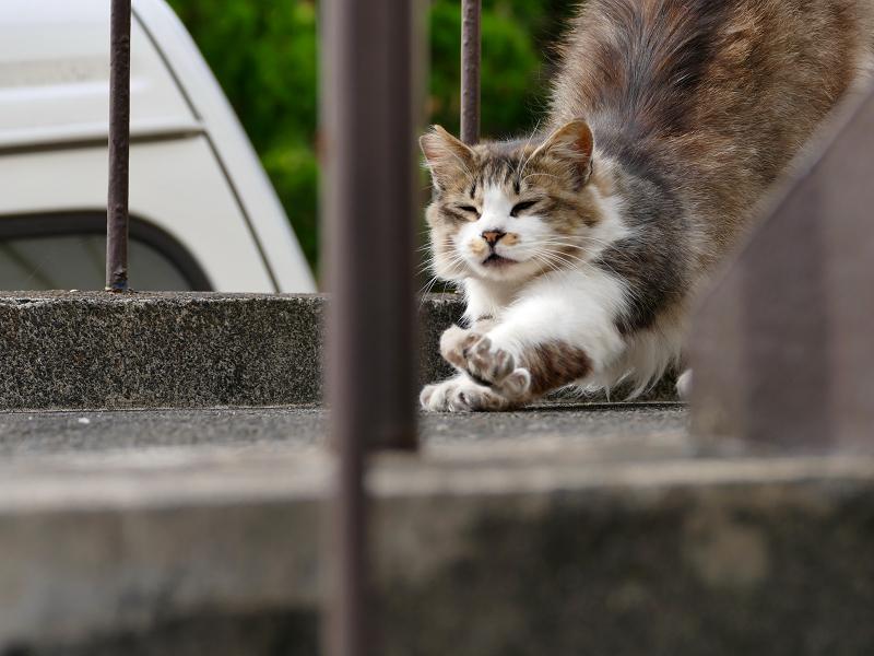 踊り場で伸びをする毛長の猫2