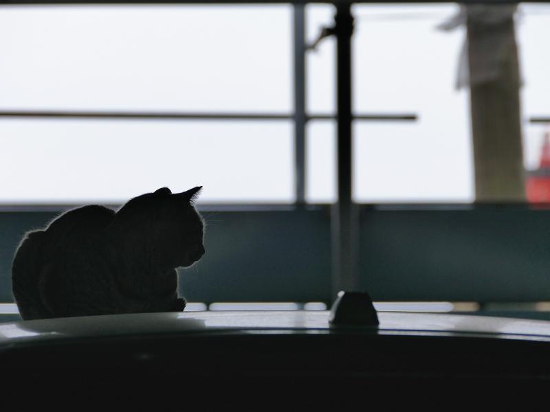 車のルーフに居る猫1