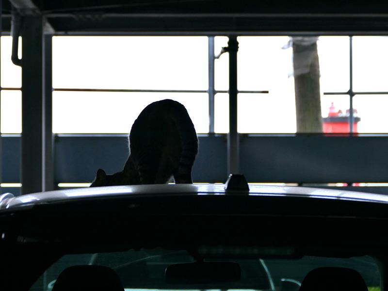 車のルーフに居る猫3