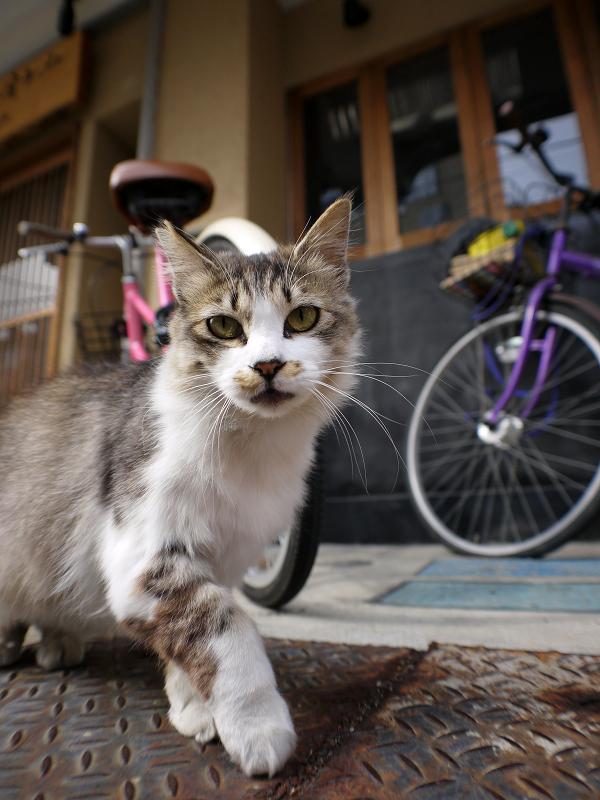 お店の前の毛長猫2