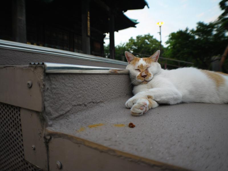 本堂階段と茶白猫2