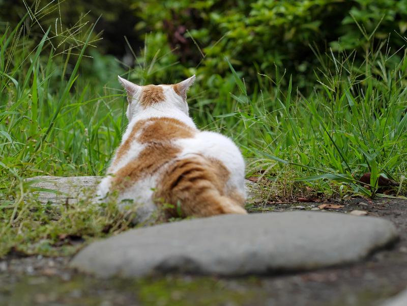 古堂境内の茶白猫