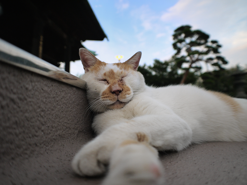 本堂階段と茶白猫3