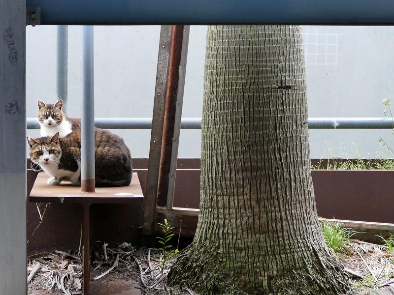 立体駐車場脇の猫たち1