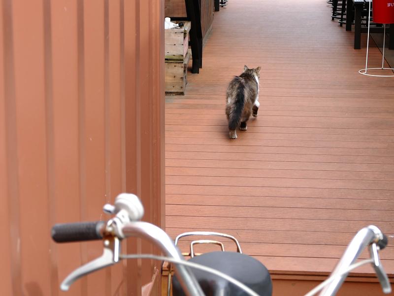 店内を歩く毛長の猫2