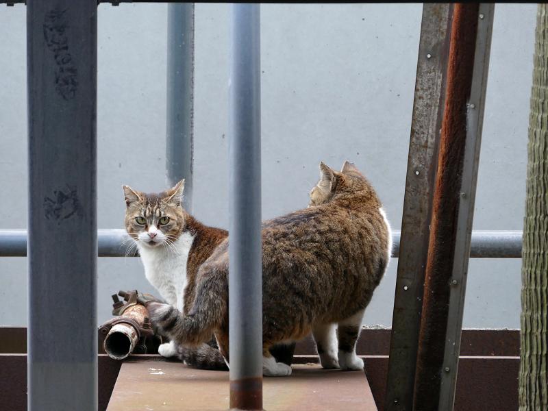立体駐車場脇の猫たち2