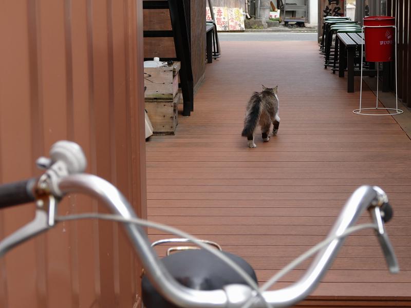 店内を歩く毛長の猫3