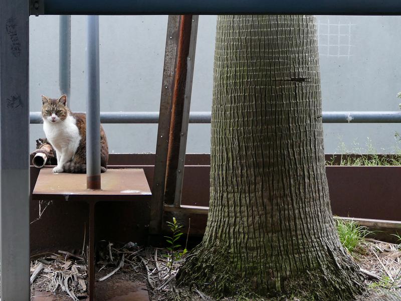 立体駐車場脇の猫たち4