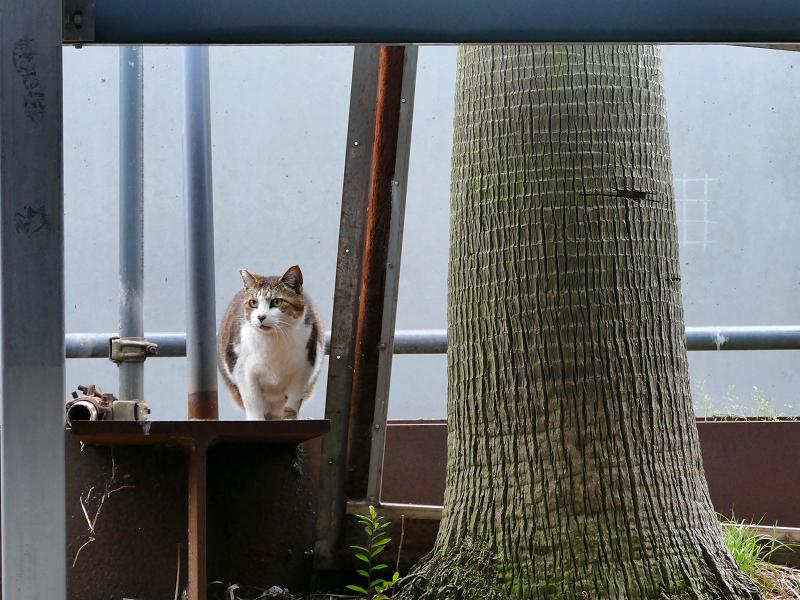 立体駐車場脇の猫たち5