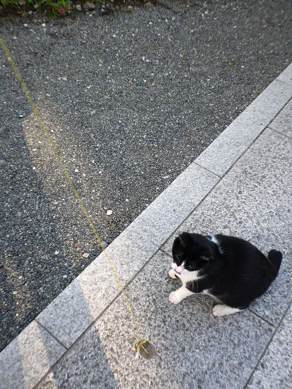 風になびくオモチャを追いかける黒白猫1