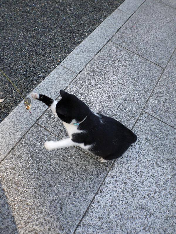 風になびくオモチャを追いかける黒白猫3