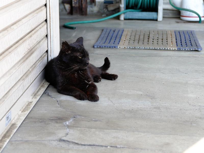 シャッター前の黒猫1