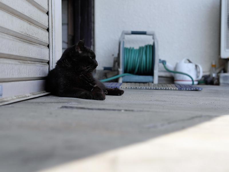 シャッター前の黒猫3