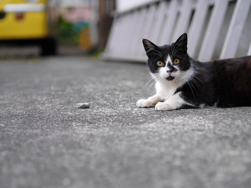 駐車場ハシゴ黒白猫2