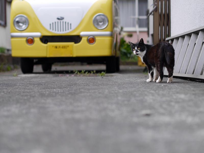 駐車場ハシゴ黒白猫3