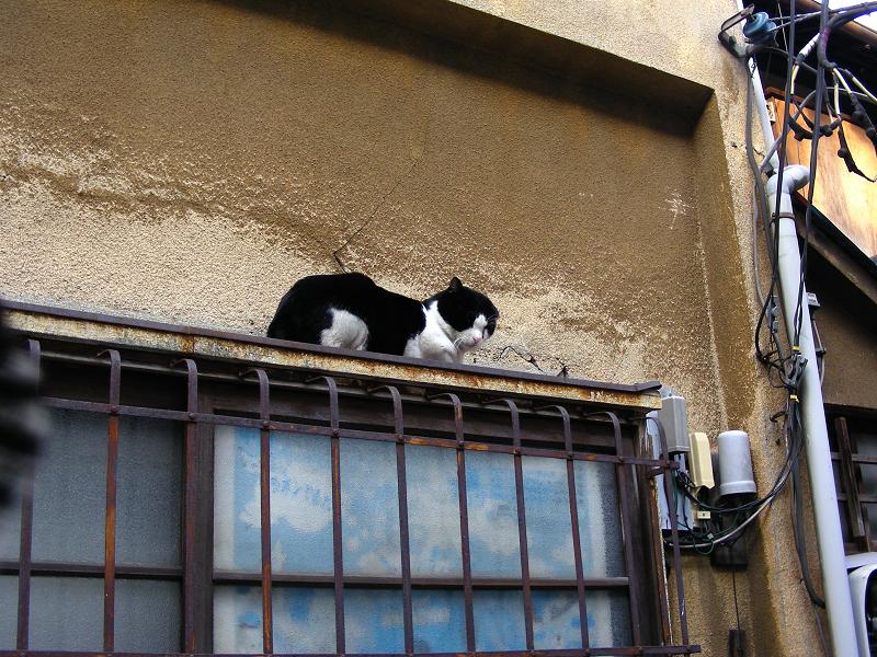 路地で出会う猫たち1