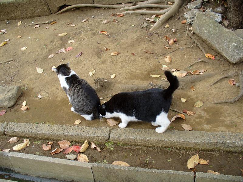 参道脇を歩く猫たち1