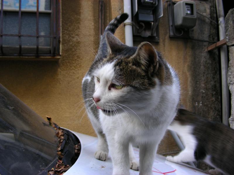 路地で出会う猫たち2