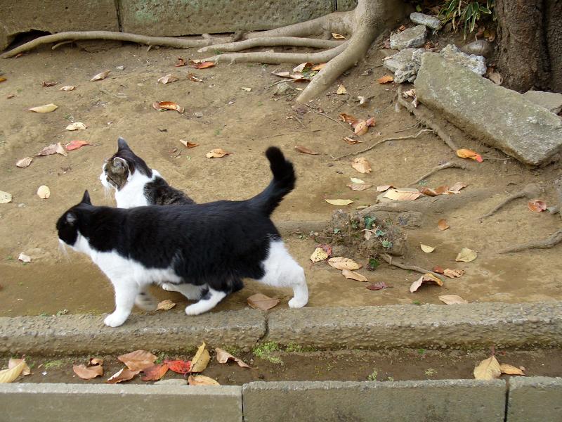 参道脇を歩く猫たち2