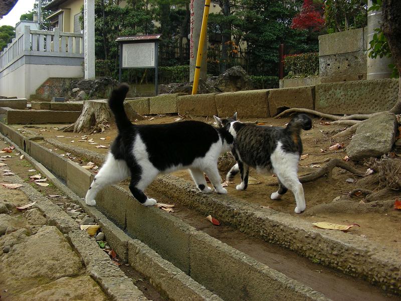 参道脇を歩く猫たち3