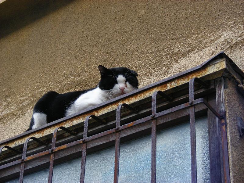 路地で出会う猫たち3