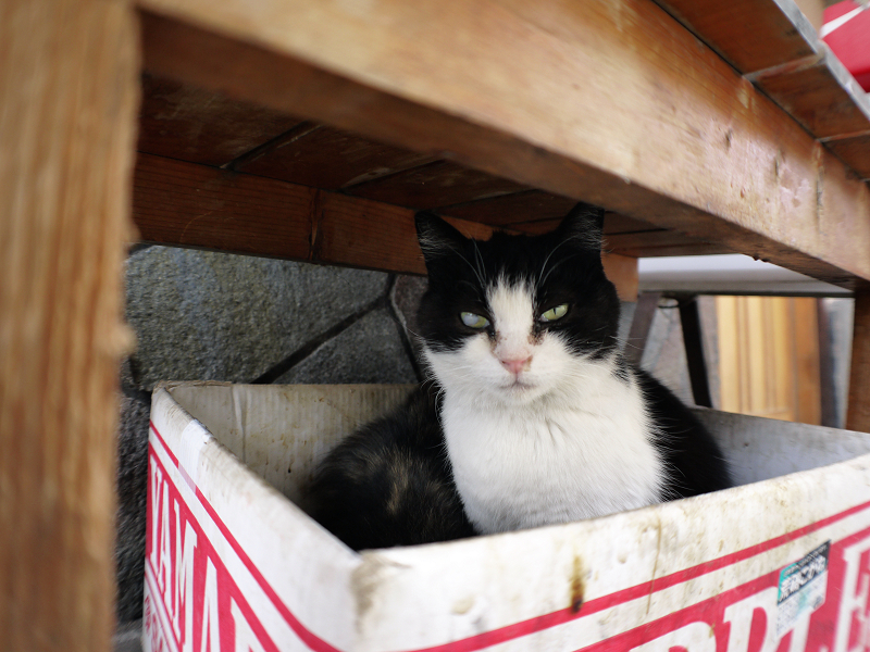 ベンチの下の黒白猫1