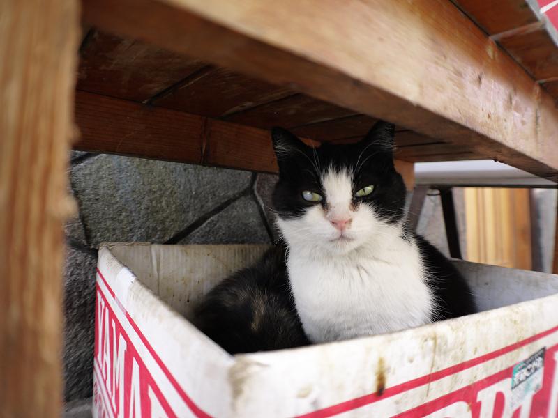 ベンチの下の黒白猫2
