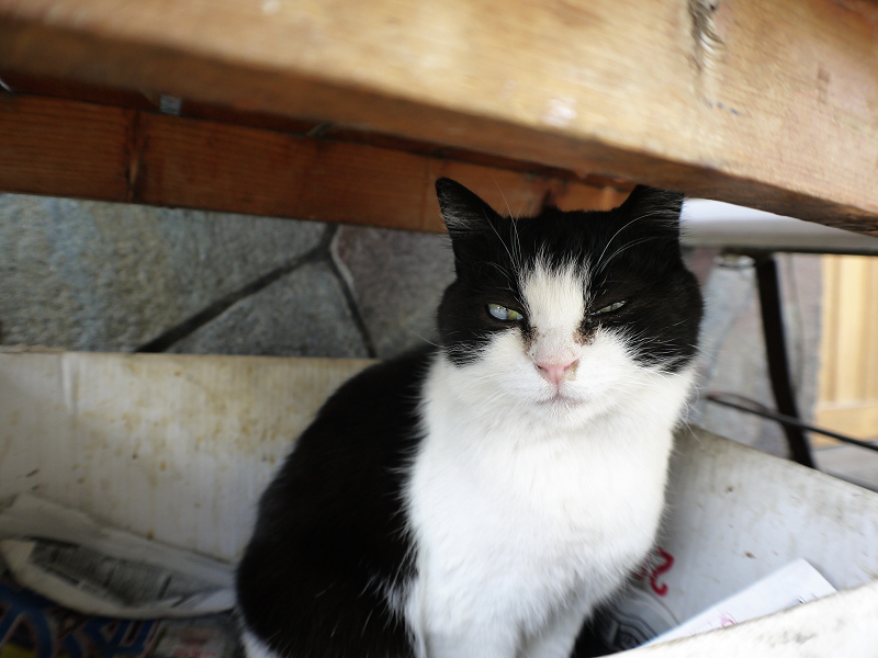 ベンチの下の黒白猫3