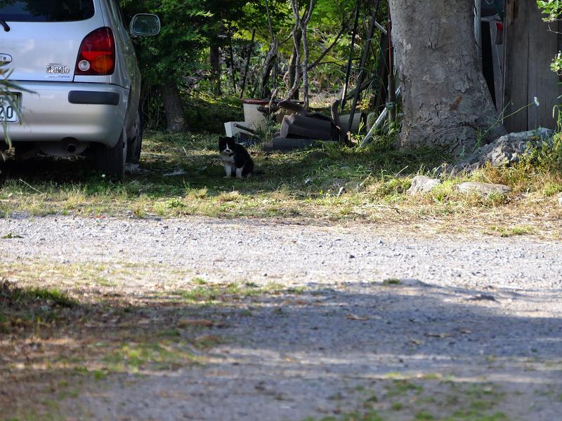 遠くで見かけた黒白猫1