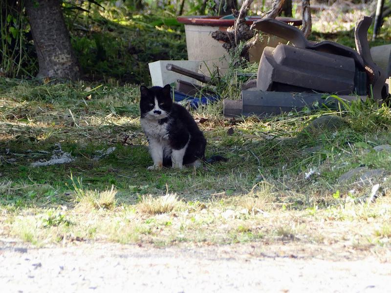 遠くで見かけた黒白猫2
