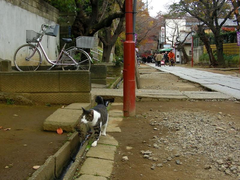 参道を歩いて集合した猫たち1