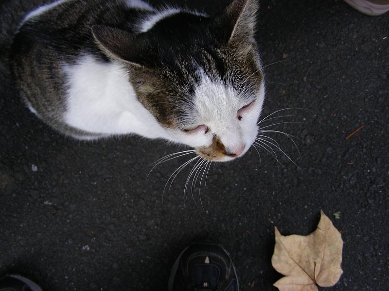 足元に寄って来た路地猫2
